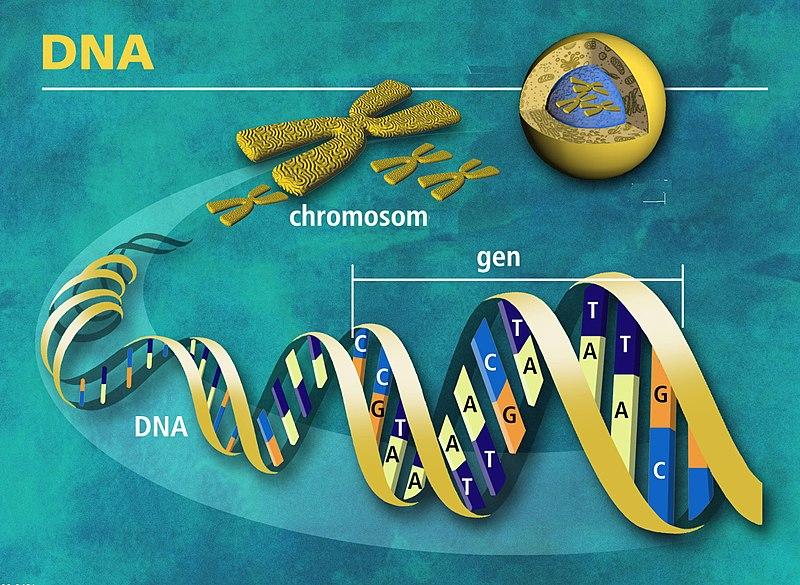 Soubor:DNA molekula života - česky.jpg