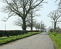 Daffodils near Spiers Piece Farm - geograph.org.uk - 1233021.jpg