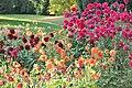 Dahlienblüte im Höhenpark Stuttgarter Killesberg.JPG