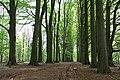 De Lutte, Tichelweg - panoramio.jpg