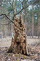 Dead tree trunk with insect nests - toter Baumstamm mit Insektennestern - 01.jpg