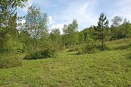 Denge Wood 1