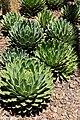 Desert Botanical Gardens 6-7 (22424245064).jpg
