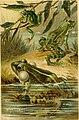 Deutschlands Amphibien und Reptilien. Eine Beschreibung und Schilderung sämmtlicher in Deutschland und den angrenzenden Gebietan vrokommenden Lurche und Kreichthiere (1897) (20700491610).jpg