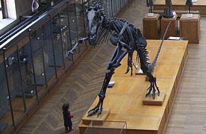 Galerie de paléontologie et d'anatomie comparée - Allosaurus fragilis.