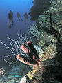 Divers and a sponge, Roatan, Honduras.jpg