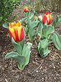 Dixon Gardens Memphis TN 2014-04-06 111.jpg