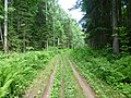 Dobryanskiy r-n, Permskiy kray, Russia - panoramio (194).jpg
