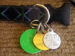 The dog license tag might be one of several do...