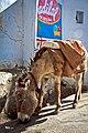 Donkey kong (5581499734).jpg