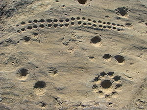 Dot carvings at Jebel Jassassiyeh