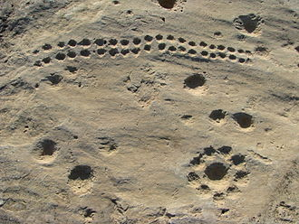 Qatar - Dot carvings at Jebel Jassassiyeh, dating to c. 4000 BC.
