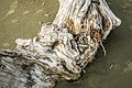 Driftwood, Vancouver Island (41955457195).jpg