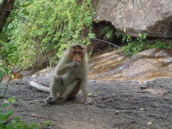Eating Monkey.jpg