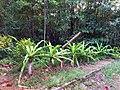 El Nido, Palawan, Philippines - panoramio (73).jpg
