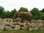 Elephant enclosure at Colchester Zoo - geograph.org.uk - 61703.jpg