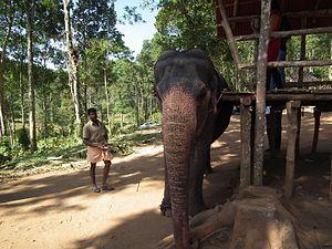 Kumily - An elephant used for safari in Thekkady