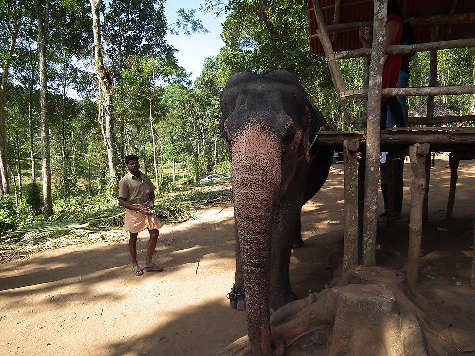 Elephant getting ready for safari in Kumily, thekady 6020