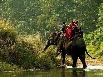 Chitwan National Park - On an elephant safari