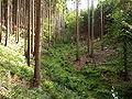 Erlenbach TS Quelle Hang.jpg
