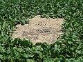 Erosion Off-site Gewässer013.JPG