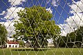 European Tree of the Year 2015 growing in the centre of football field - panoramio (1).jpg
