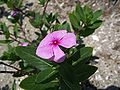 FL Marineland purple flower01.jpg