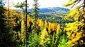 Fall Color at Lick Creek, Wallowa-Whitman National Forest (26776501566).jpg