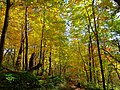 Fall Foliage at Devil's Lake State Park - panoramio.jpg