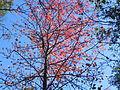 Fall at FLSP (5248772993).jpg