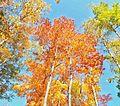Fall colors in Ontario (21476244543).jpg