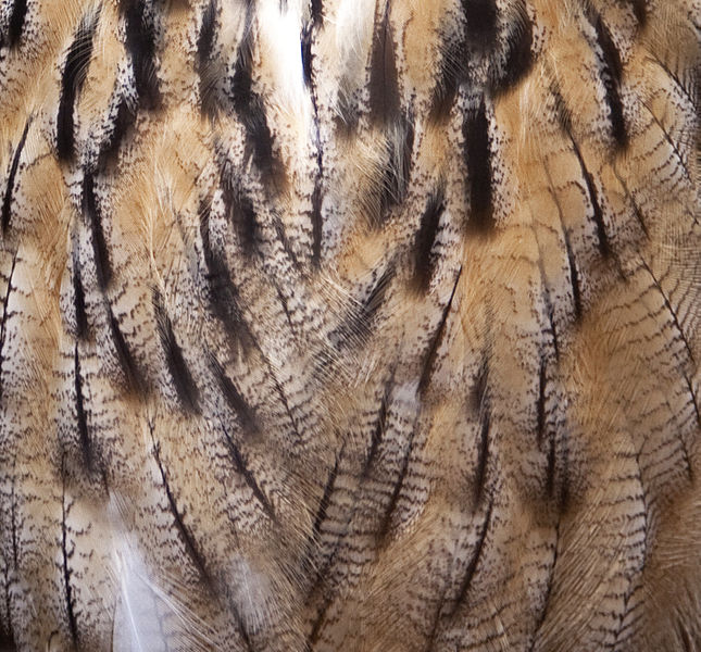 File:Feathers (3974796232).jpg