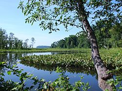 Featherstone National Wildlife Refuge (4832451521).jpg