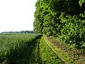 Feldweg am Waldrand auf dem Heuberg - geo.hlipp.de - 25348.jpg
