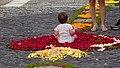 Festa de Nossa Senhora da Luz flower carpet child (Ponta da Sol) (37386594744).jpg