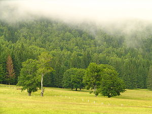 Harghita County - Landscape around Lake Sfânta Ana, southern Harghita County
