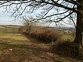 Field boundary near East Butterleigh - geograph.org.uk - 1766579.jpg