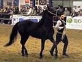 Fieracavalli 2014 - Cavallo Romano3.jpg