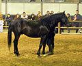 Fieracavalli 2014 - Cavallo Romano5.jpg