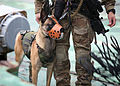 Finnish Naval Special Forces, Trident Juncture 15 (22641114451).jpg