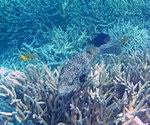 Fish 12 (30961901276).jpg