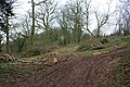 Five , Six, Pick up sticks - Broxash Wood - geograph.org.uk - 1345256.jpg