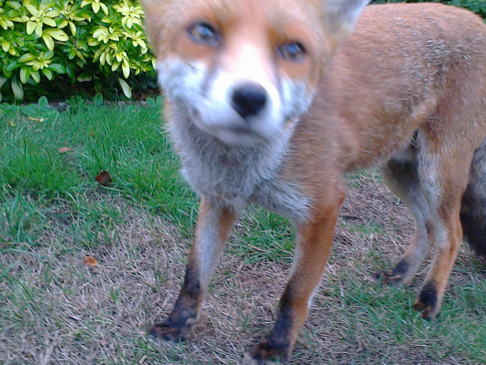 Fleet Fox AKA Rolf, Winterwatch Brighton