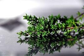 composition herbe de provence