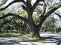 Floral City Hist Dist - Oak01.jpg