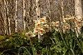 Flore de Bercy 2.JPG