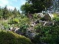 Flore des escarpements du Hohneck-Jardin d'altitude du Haut-Chitelet.JPG