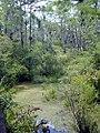 Florida freshwater swamp usgov image.jpg