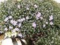 Flower.2389.JPG