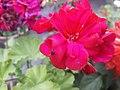 Flower20180527 184838.jpg